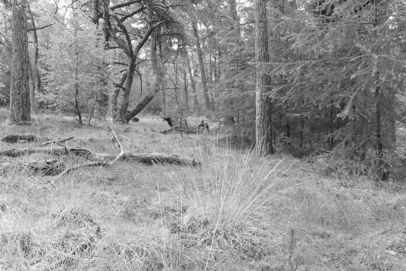 Natuurvisie - provincie Overijssel